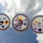 Nature Suncatchers