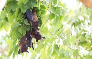 Bats Appreciation Day